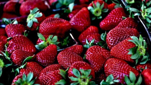Erdbeeren für deinen Vitamin-C Bedarf